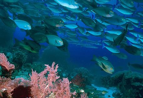 Raja Ampat Dive Blog – Follow our Dive Trips